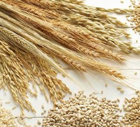 Farináceos e Cereais